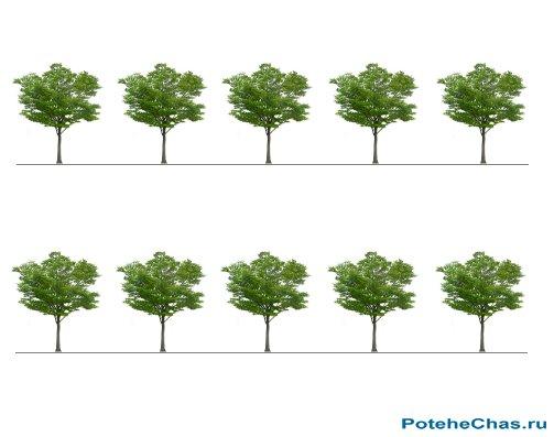 Десять деревьев - Графическая головоломка